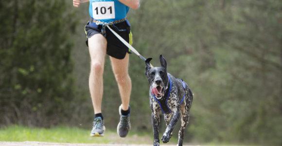 Ceinture pour courir avec son chien