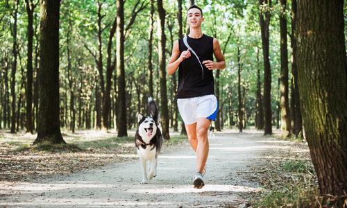 Courir chien