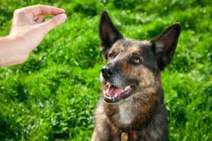 Tapis Educateur Chien - 15 techniques à connaître - Éducateur canin - Tuto