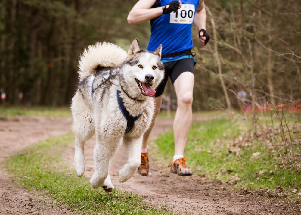 Pratiquer un sport canin