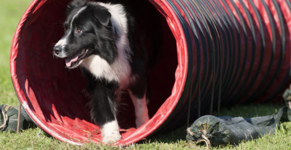 Tunnel d'agility